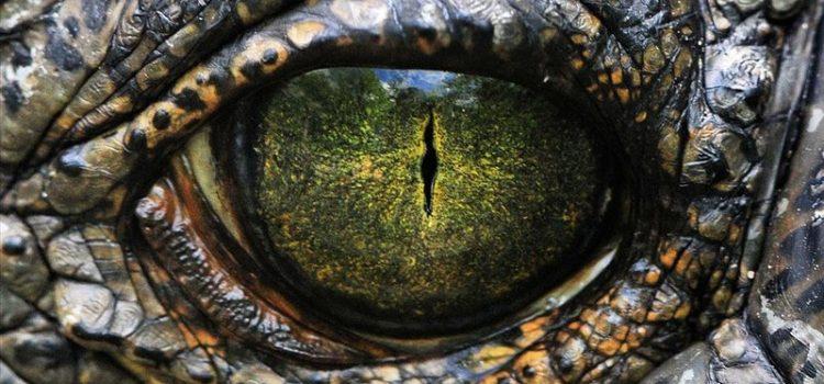 Regarder le dragon dans les yeux, c'est regarder son problème pour éviter le burn-out